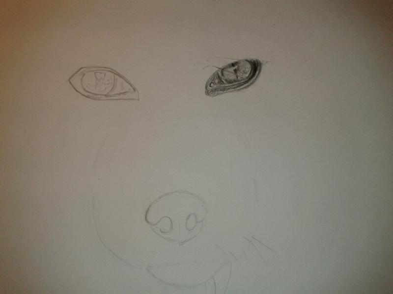 Рисуем голову лисы - шаг 2