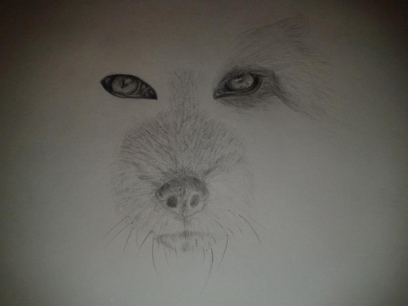 Рисуем голову лисы - шаг 5
