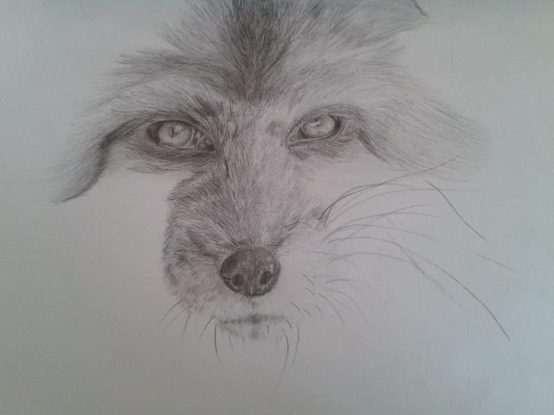 Рисуем голову лисы - шаг 7