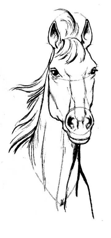 Рисуем голову лошади в анфас - шаг 6