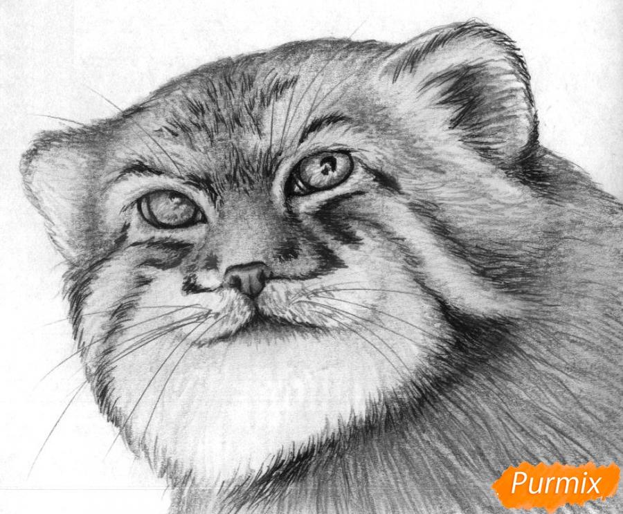Как нарисовать голову манула простыми карандашами и чёрной ручкой поэтапно