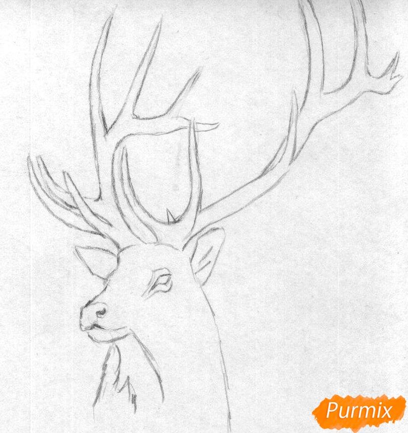 Рисуем голову оленя карандашами и чёрной ручкой - шаг 1