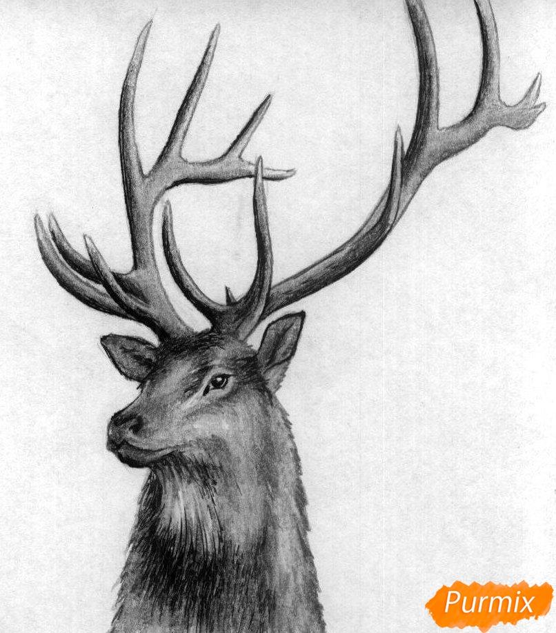 Как нарисовать голову оленя карандашами и чёрной ручкой поэтапно