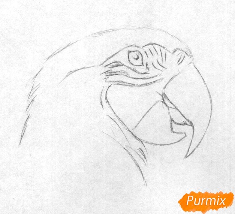 Рисуем голову попугая Ара карандашами - шаг 1
