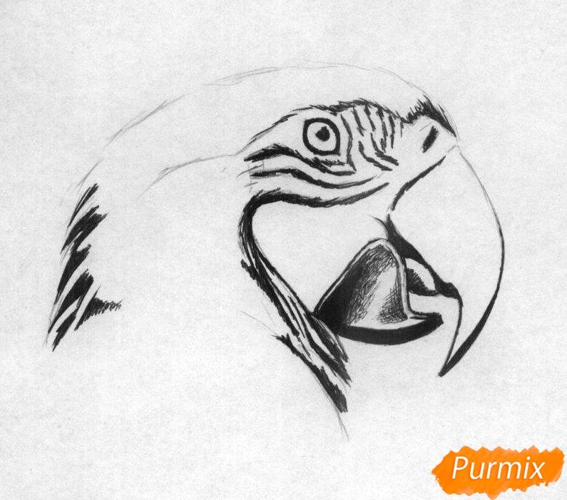 Рисуем голову попугая Ара карандашами - шаг 2