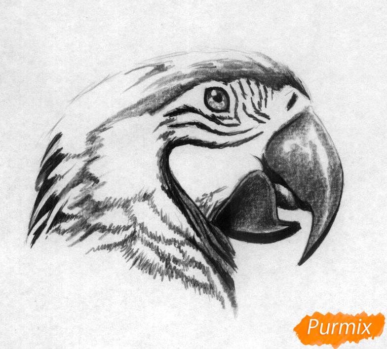 Рисуем голову попугая Ара карандашами - шаг 3