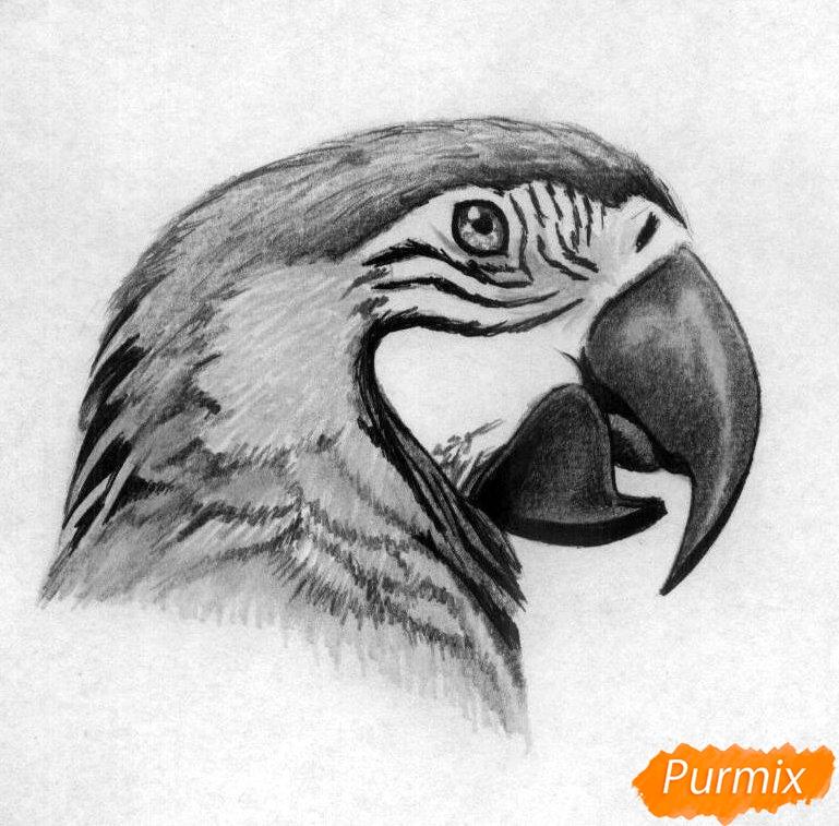 Рисуем голову попугая Ара карандашами - шаг 4