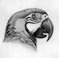 Рисунок голову попугая Ара