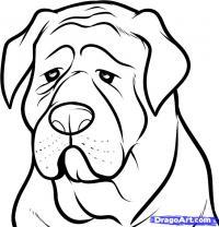 голову собаки породы мастиф