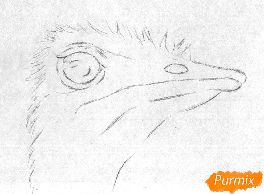 Рисуем голову страуса карандашами и чёрной ручкой - шаг 1