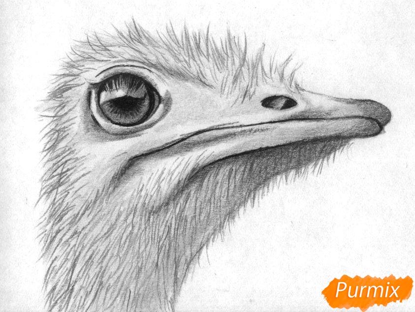 Как нарисовать голову страуса карандашами и чёрной ручкой поэтапно