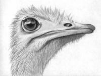 голову страуса карандашами и ручкой