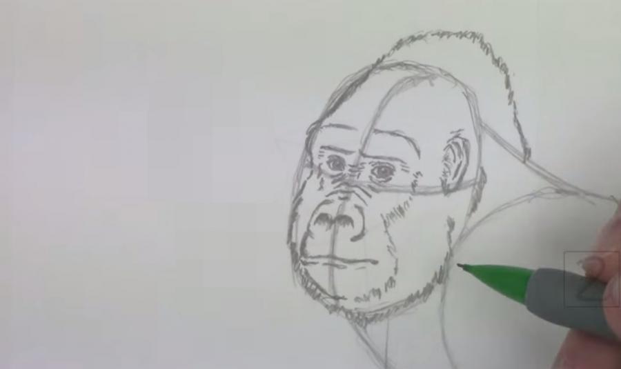 Рисуем гориллу - шаг 3