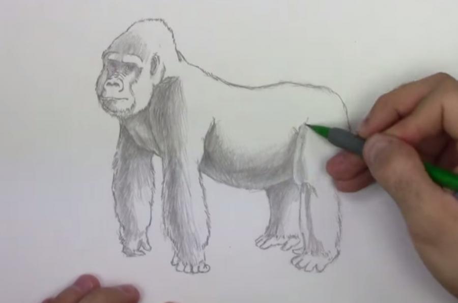 Рисуем гориллу - шаг 6