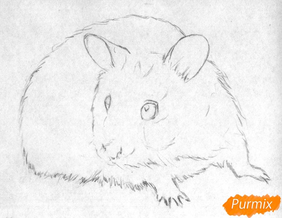 Рисуем хомяка карандашами и чёрной ручкой - шаг 1