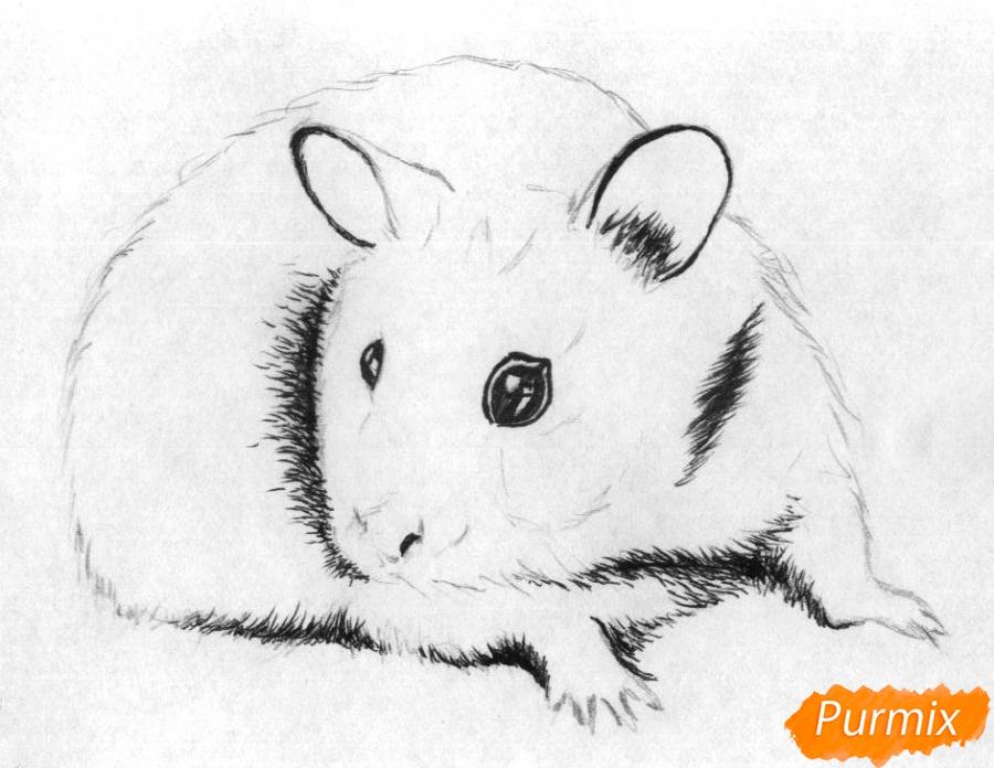 Рисуем хомяка карандашами и чёрной ручкой - шаг 2