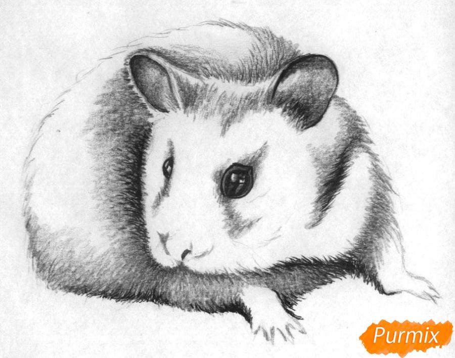 Рисуем хомяка карандашами и чёрной ручкой - шаг 3