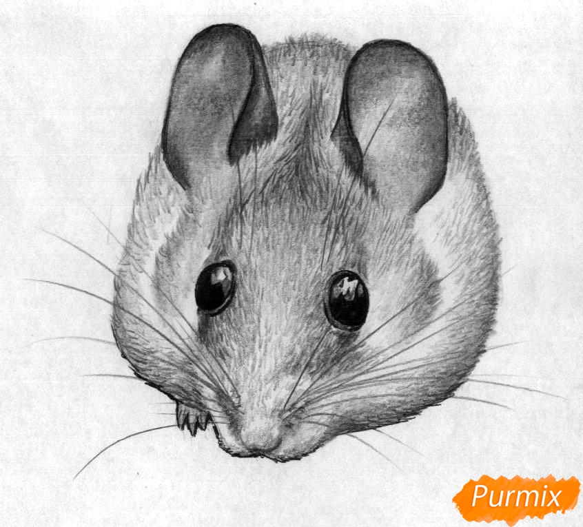 Рисуем иглистую мышь  и ручкой - шаг 4