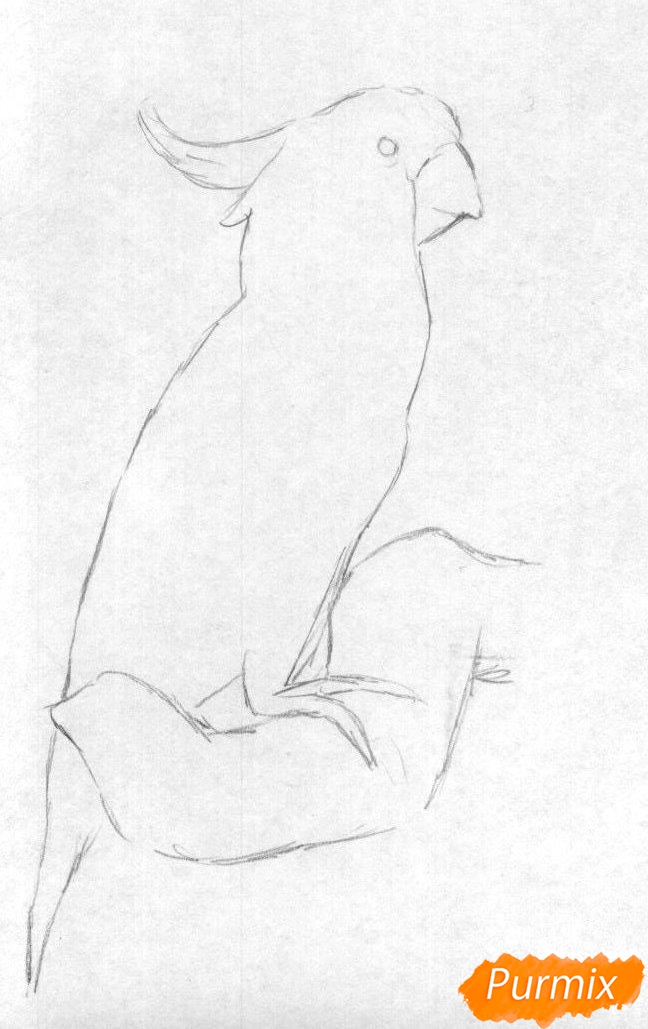 Рисуем Какаду в полный рост карандашами и ручкой - фото 1