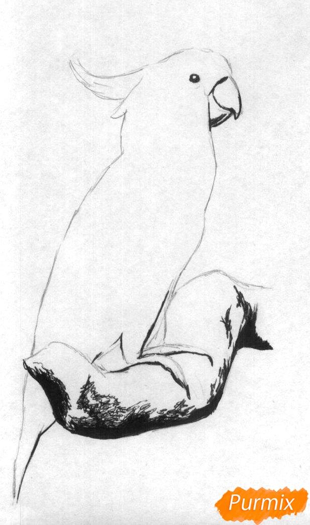 Рисуем Какаду в полный рост карандашами и ручкой - фото 2