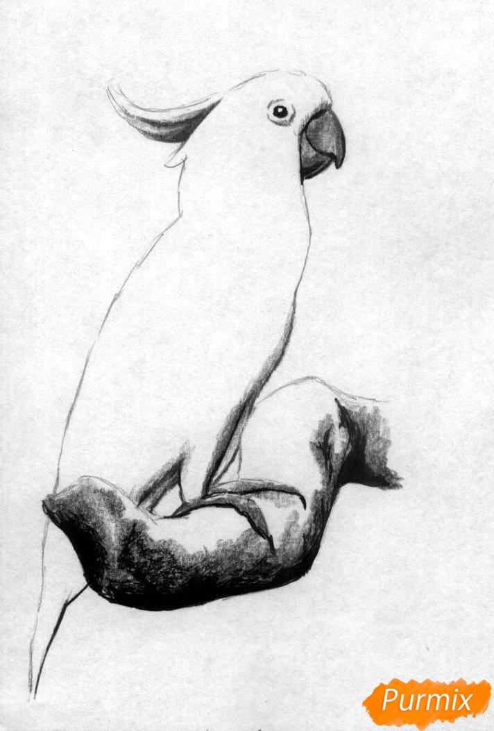 Рисуем Какаду в полный рост карандашами и ручкой - фото 3
