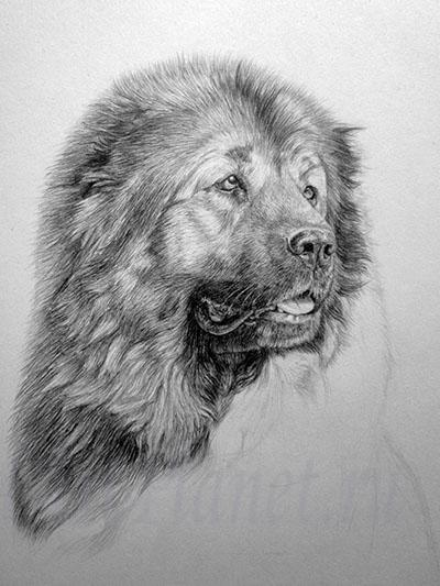 Рисуем Кавказскую овчарку - шаг 11