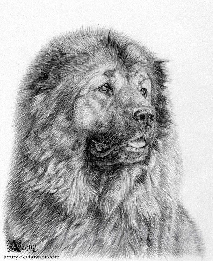 Рисуем Кавказскую овчарку - шаг 13