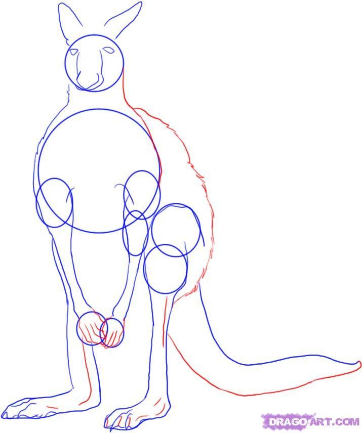 Рисуем Кенгуру - шаг 4