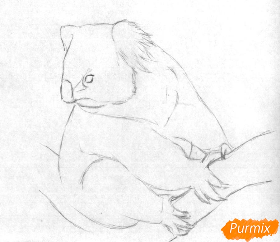 Рисуем коалу - шаг 1