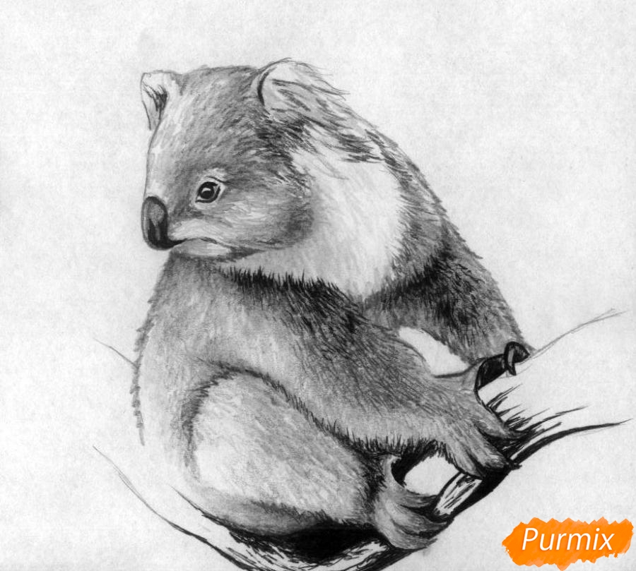 Рисуем коалу - шаг 4