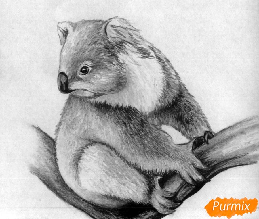 Рисуем коалу - шаг 5