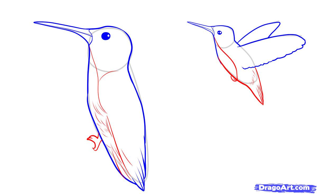 Рисуем орла в полете