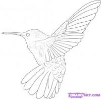 Фото колибри