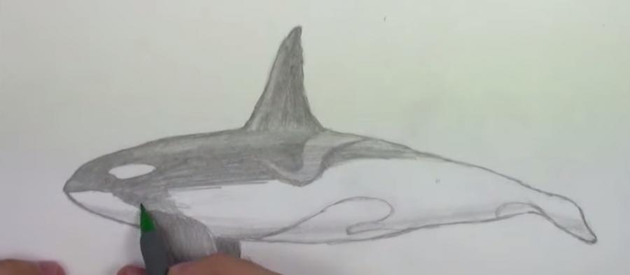 Рисуем Косатку  на бумаге