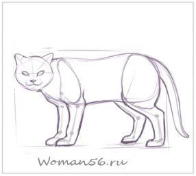 Рисуем кота  для начинающих - шаг 10