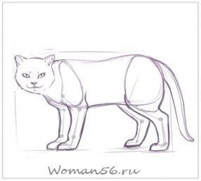 Рисуем кота  для начинающих - шаг 11
