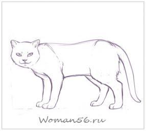 Рисуем кота  для начинающих - шаг 12