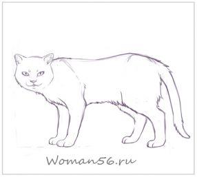 Рисуем кота  для начинающих - шаг 13