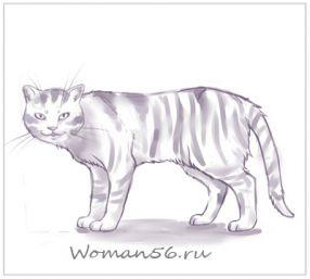 Рисуем кота  для начинающих - шаг 14