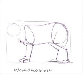 Рисуем кота  для начинающих - шаг 5