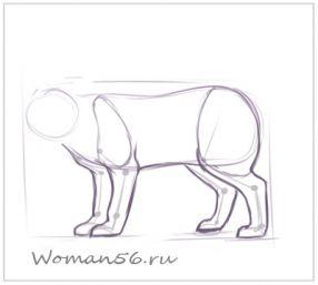 Рисуем кота  для начинающих - шаг 6