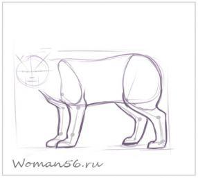 Рисуем кота  для начинающих - шаг 7