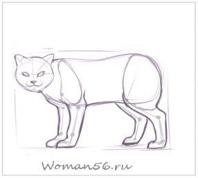 Рисуем кота  для начинающих - шаг 8