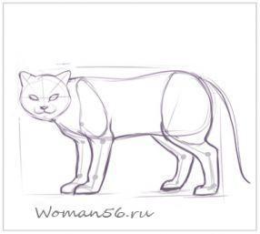 Рисуем кота  для начинающих - шаг 9