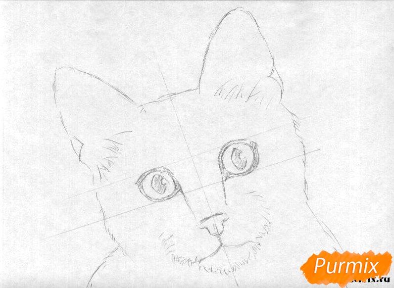 Рисуем портрет кошки породы египетская мау - шаг 1