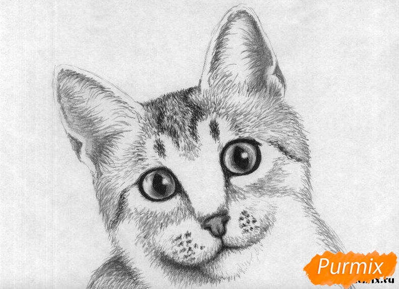 Рисуем портрет кошки породы египетская мау - шаг 4