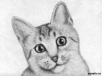 Рисунок кошку породы египетская мау