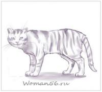 Как нарисовать кошку шаг за шагом карандашом