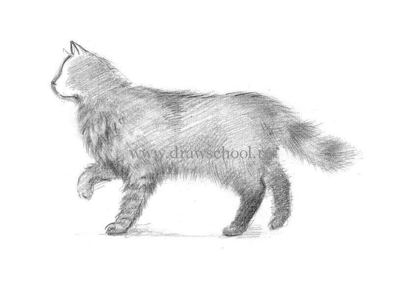 Как нарисовать кошку в движении карандашом поэтапно