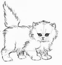 Фото котенка карандашом